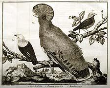 Coq-de-Roche, et al.