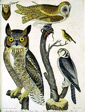 owls and flycatcher